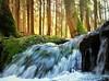 IAwokeIapetus (BphotoR) Tags: bphotor april water wasser bach creek flow germany settomusic spring springtime frühling forest wald light canon canonpowershotg10 music iapetus mywinners abigfave coth5 anawesomeshot