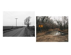 Somewhere in Kansas. (williamhess) Tags: blackandwhite color tree forest landscape puddle photography woods diptych farmland powerlines kansas dirtroad oregontrail