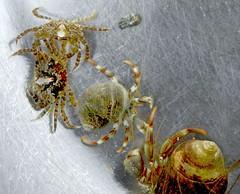 we went rockpooling ... (Edinburgh Nette) Tags: eva crabs alfie rockpooling ribbet crustaceans march13