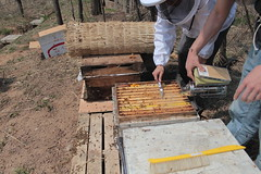 IMG_0092 (urban bees seoul) Tags: urban bees honey seoul beehive  beekeeper