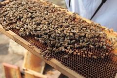IMG_0119 (urban bees seoul) Tags: urban bees honey seoul beehive  beekeeper