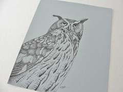 Great Horned Owl in ink by Mary Richmond (mbrichmond) Tags: inkdrawing greathornedowl birddrawing owldrawing owlart