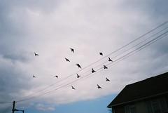 Wheeling (knautia) Tags: uk england sky film birds clouds easter bristol march pigeons flock olympus ishootfilm xa2 200iso bedminster agfa olympusxa2 wheeling agfavista 2013 chessels xa2roll90