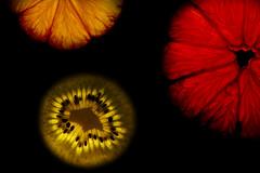 slices (barbaraQn) Tags: light red orange black green fruits yellow dark lemon kiwi flickrchallengegroup flickrchallengewinner