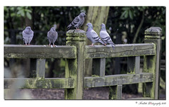 The meeting place (Fred255 Photography) Tags: uk england london nature 300mm l usm barnes manfrotto eos1ds markiii llens frameit canonef300mmf4lisusm 1dsmk3 canoneos1dsmarkiii wwtlondonwetlandcentre mygearandme