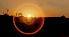 Lens flare over Okha Sunset (arfabita) Tags: trees sunset panorama india birds silhouette horizontal rural sunrise landscape countryside interesting sand different village traffic trails scene photograph lensflare flare birdsinflight unusual concept dust conceptual viewpoint bushes rendered gujarat digitaleffects flockofbirds hinterlands telegraphpoles powercables dwarka okha roaddust betdwarka lookingdownalane