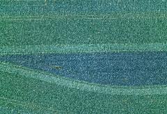 Variations Of Blue & Green (Aerial Photography) Tags: by ndb sr 040517920 25071995 ackerbau aiterhofen asham bauernmalerei blau blaukraut bogen feld fotoklausleidorfwwwleidorfde gemse grn kohlkopf landschaft landwirtschaft linien luftaufnahme luftbild reihen rotkohl weiskraut abstrakt aerial agriculture blue farmerspainting field green landscape lines outdoor rows verde aiterhofenlkrstraubingbogen bayernbavaria deutschlandgermany deu