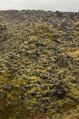 Djpalnssandur 07 (sarahmonious) Tags: djpalnssandur djpalnssandurbeach snfellsnespeninsula snfellsnes moss lavafield ringroad route1iceland route1 iceland iceland2016 traveling
