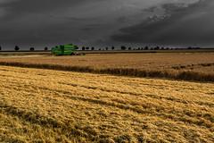 Golden Harvesting (++sepp++) Tags: graben bayern deutschland de bavaria germany landschaft landscape feld field mhdrescher harvester combine gerste barley gold