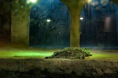 Acuario Agosto 2016 (11) (Fernando Soguero) Tags: acuario zaragoza acuariodezaragoza aragn turismo aquarium nikon d5000 fsoguero fernandosoguero