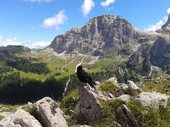 Cornacchia dal becco giallo (zambi74) Tags: passorolle castellazzo baitasegantini trento trentino mountain italia italy montagna cornacchia becco giallo uccello crow
