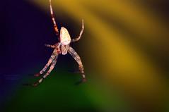 Renato (swaily  Claudio Parente) Tags: ragno spider luce macro nikon swaily claudioparente d300