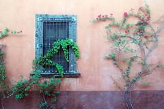 Colorful doors and windows of San Miguel de Allende (asitrac) Tags: americas amériques architecture bajío color guanajuato house mexico mexique northamerica sanmigueldeallende scene scenery street travel colorful colors couleurs window fenêtre pink wall mx eo