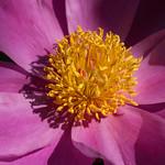 oneplant, ouryard, plant, jdy140 XX201505201054.jpg thumbnail