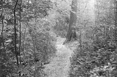 Toronto, Canada (Manuel Blayo) Tags: canonet28 ilford hp5 bw film 35mm canada ontario highpark tree toronto