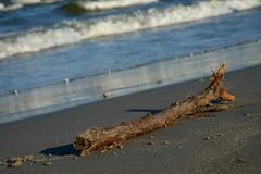 Castaway (Goruna) Tags: blacksea water beach stick waves stock gestrandet castaway goruna woodinanyform flickrlounge