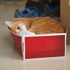 DSC09799S (lazybonessss) Tags: cat sonya7 sonyilce7 leica elmaritm90 inthebox momo kitten2
