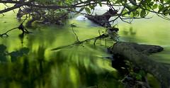 ND Filter Experiment an der Rur (kalakeli) Tags: nd ndfilter nd1000 nd30 rur dren fluss river wasser water le langzeitbelichtung longexposure grn green 8secs