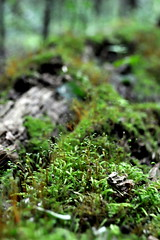 On The Shoudlers of Giants (Funkomaticphototron) Tags: coryfunk green moss sprout sprouts tree forest aftonstatepark mn minnesota hiking arboral dof depthoffield decay rebirth