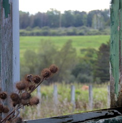 Through a barn window (yooperann) Tags: chatham upper peninsula michigan state university north experimental extension farm rural alger county community collaborative dinner fundraiser burrs window