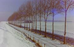 dutch winter (59) (bertknot) Tags: winter dutchwinter dewinter winterinholland denbommel winterinthenetherlands hollandsewinter denbommelandsurrounds winterinnederlanddutchwinter