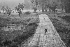 Dr. Jack (nandadevieast) Tags: india wolf kanha kanhanationalpark anuragagnihotri nandadevieast