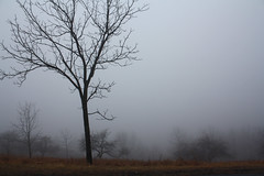 Foggy Day (jessp.) Tags: fog day jonathan quote foggy inspirational lockwood huie