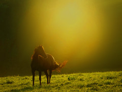 day51/7000 (new_day_new_life) Tags: horse art nature grass animal misty golden mygearandme rememberthatmomentlevel1 flickrsfinestimages1 flickrsfinestimages2