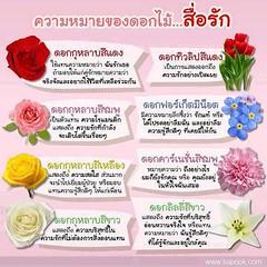 วันวาเลนท์ปีนี้ ให้ดอกไม้ ชนิดไหน แก่คนรักดี ความหมายดีๆทั้งนั้นเลยนะคะ เพื่อนๆๆ