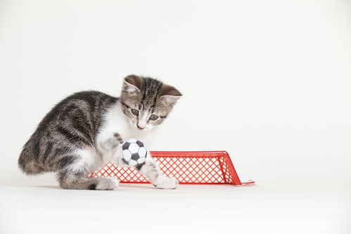 Brown and White Kitten Playing Soccer