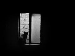(Daniel Iván) Tags: old blackandwhite pet blancoynegro window silhouette wall cat contraluz ventana pared blackwhite highcontrast textures gato silueta viejo mascota texturas blackwhitephotography blackwhitephoto altocontraste blackwhitephotos backlightning fotografíablancoynegro thecatwhoturnedonandoff ldlnoir