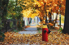 918-03 (Joe-Lynn Design) Tags: autumn tree fall hydrant fire winnipeg