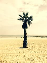 Barcelona Beach *7