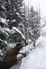 20130223_133103 (Herb_76) Tags: park schnee winter snow creek nationalpark stream republic czech national snowshoeing brook schneelandschaft sumava bayerischerwald schneeschuhtour