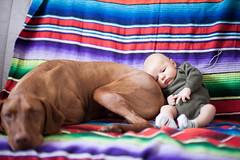 (Natalie Ann Pigliacampo) Tags: family dog baby vizsla february jcp 2013 nataliepigliacampo