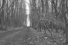 Pathway 1 (Callum_Peck) Tags: camera trees white black nature standing forest way out suffolk spring woods different shadows view natural path pat pathway indiviual d3100