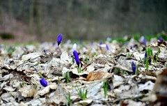 Sign of Spring (SpandanV) Tags: summer flower nature germany spring nikon blossom foliage growth weingarten nikkor18105mm nikond7000