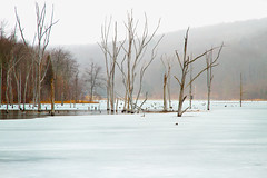 Winter in the Dead Trees (SunnyDazzled) Tags: statepark longexposure trees winter lake snow cold ice nature water landscape dead frozen still silent bare atmosphere reservoir falling shore freeze trunks ironworks deadtrees longpond