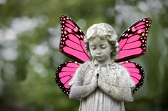 pink angel (poly-ester) Tags: pink art angel photoshop altered butterfly cemetary praying cement