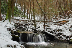 Plunge (Nicholas_T) Tags: trees winter snow creek waterfall moss rocks stream pennsylvania falls cascades creativecommons sprucerun hemlocks clintoncounty tsugacanadensis baldeaglestateforest easternhemlocks