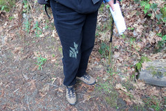 Spore print of Penagramma triangularis Goldback Fern (David A. Hofmann) Tags: california fern napacounty sporeprint pentagrammatriangularis goldbackfern