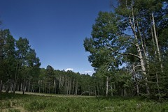 Grand Place (Reptilian_Sandwich) Tags: blue trees wild summer sky plants newmexico green colors leaves forest walking outdoors solitude hiking oasis solidarity remote mountainside ferns aspen afternoonlight aldoleopoldwilderness blackrange