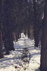 Pathway (Amber Redfield) Tags: wood trees snow tree nature forest canon landscape landscapes woods path 7d forests pathway canoneos7d canon7d amberredfield