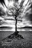 Millarochy Bay Tree Loch Lomond (John Farnan Photography) Tags: sunset blackandwhite scotland dramaticsky trossachs lochlomond scotlandthebrave lochlommond scottishlandscapes anseladamsinspired trossachsnationalpark dramaticshot dramaticscene dramaticimage scotlandlandscapes millarochytree lochlomondinmono millarochytreelochlomond lochlomondincolour