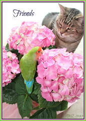 This Is Tasty, Come Try Some... (bigbrowneyez) Tags: flowers stilllife bird leaves cat dof photoshoot sweet gorgeous tabby blossoms adorable tasty fresh pottedplant bloom mypets fiori fabulous joyful lovebird bestfriend flickrfun hydrangeas bello samling vigilantphotographersunite bellossimo