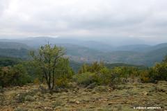 Valle de la Salendrinque (Thoiras, Gard) (maisondelarandonnee) Tags: france tree stone landscape hike paysage arbre languedoc randonne garrigues cvennes roussillion draille thoiras salindrenque rouveyrac