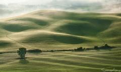 Rolling Hills (Tommaso Renzi) Tags: light tree fog sunrise hills tuscany toscana valdorcia albero rolling colline tuscanyhilsrollingcollinesunsettramonto