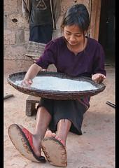 ethnic Khmu girl sifting rice, Luang Nam Tha, Laos (jitenshaman) Tags: travel work asian asia rice native labor traditional tribal destination oriental orient flour laos ethnic lao hilltribe childlabor chore laotian luangnamtha ethnicminority sift worldlocations khmu