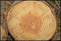 MAYOR DE EDAD (6toros6) Tags: naturaleza nikon alfredo tronco aficionados
