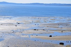 low low tide (SusanCK) Tags: seattle sea beach tide lowtide discoverypark washingtonparks susancksphoto northwestamerican